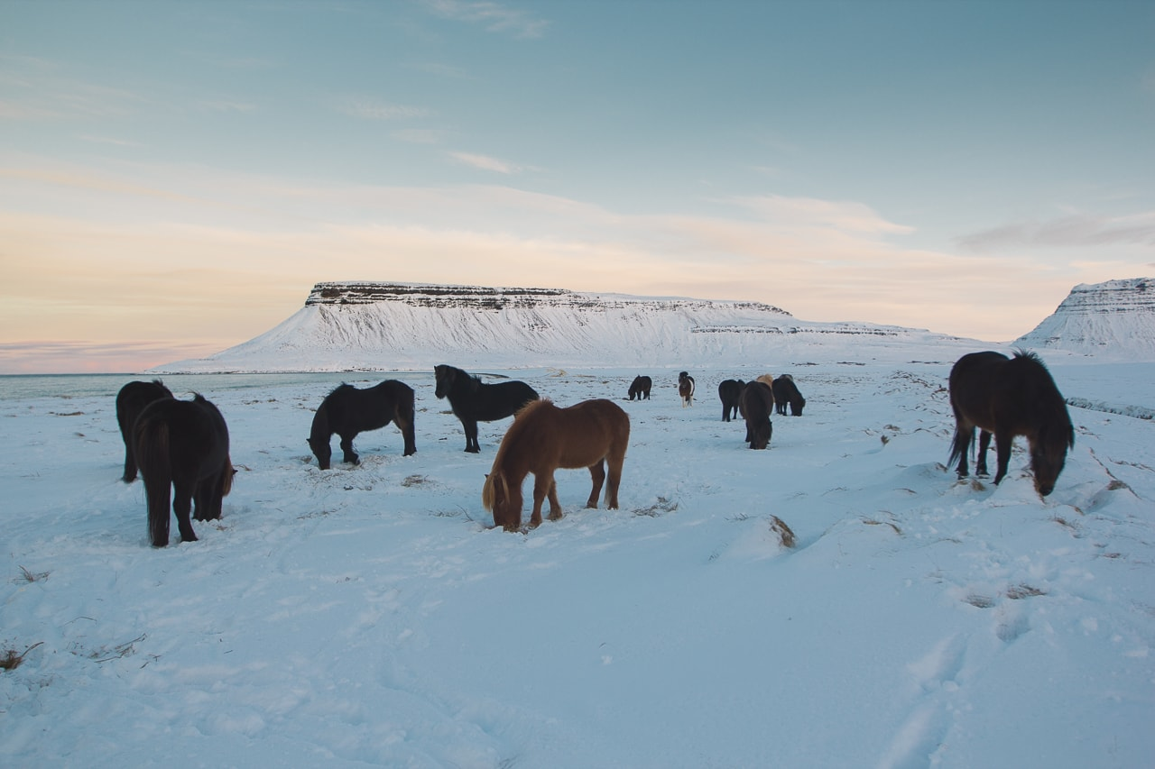 Iceland winter road trip - Kirkjufellsfoss Horses - by Conscious by Chloé