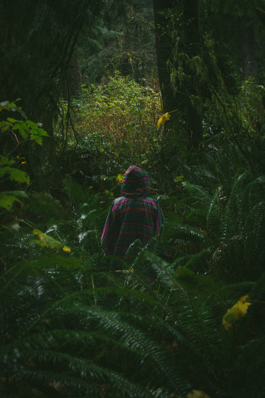 Silhouette in the middle of the Oregon coast fern forest by Octave Zangs for Conscious by Chloé