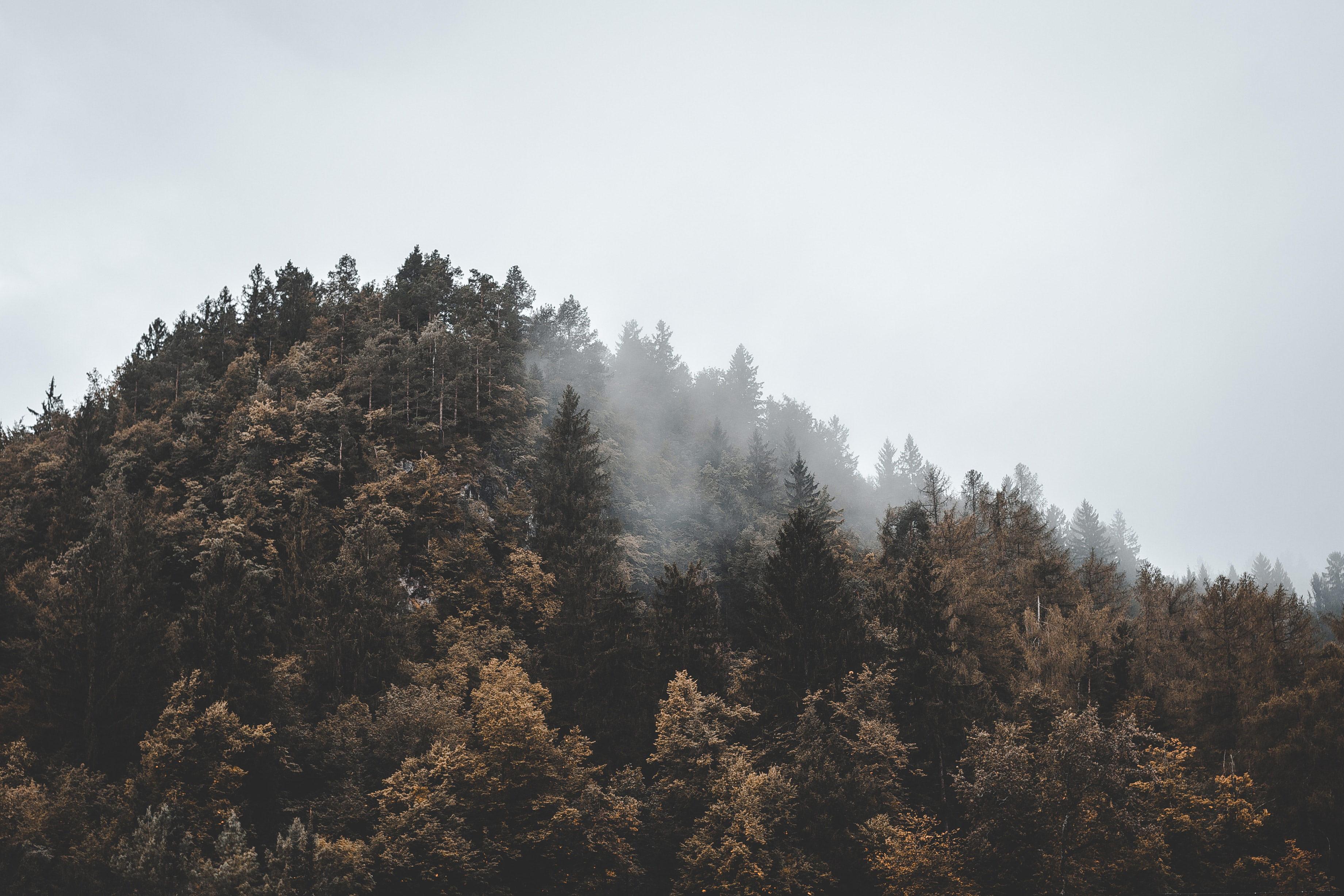 Foggy Mountain by Florian van Duyn for Conscious by Chloé